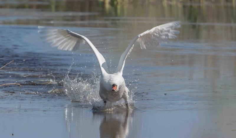Takeoff (Swam)