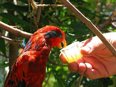 CO 2009 Denver Zoo 0618 (31)