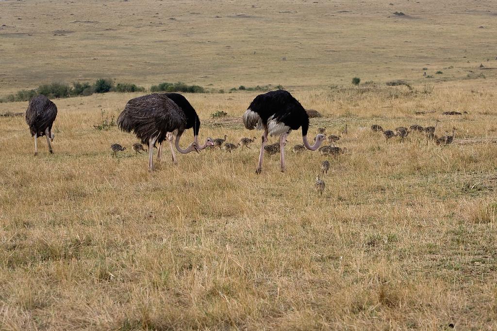20100911_Maasi Mara_739