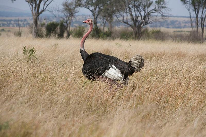 2007 07 25 Masai Mara 667