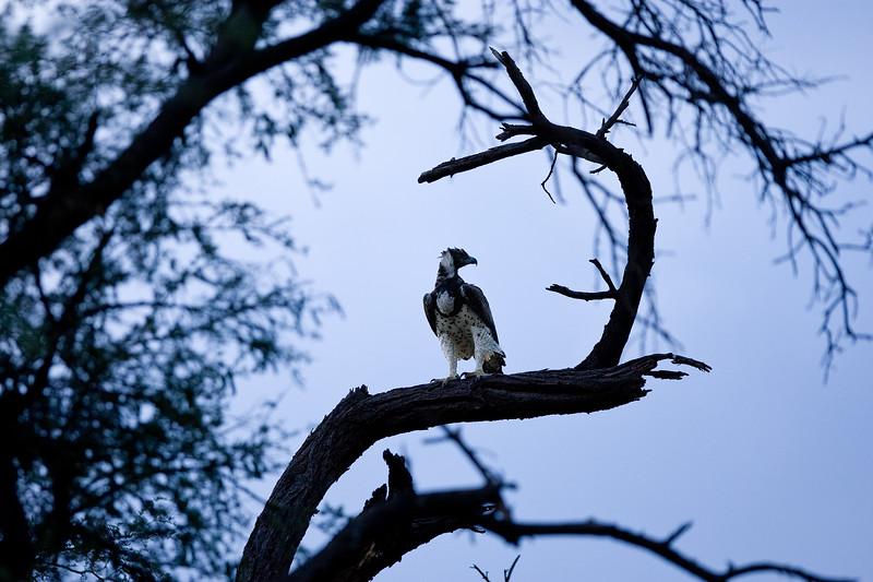 20100903_Samburu_0583