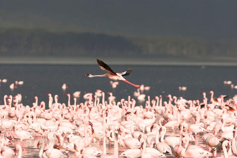 2007 07 22 Lake Nakuru 422