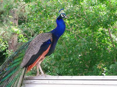 CO 2009 Denver Zoo 0615 (6)