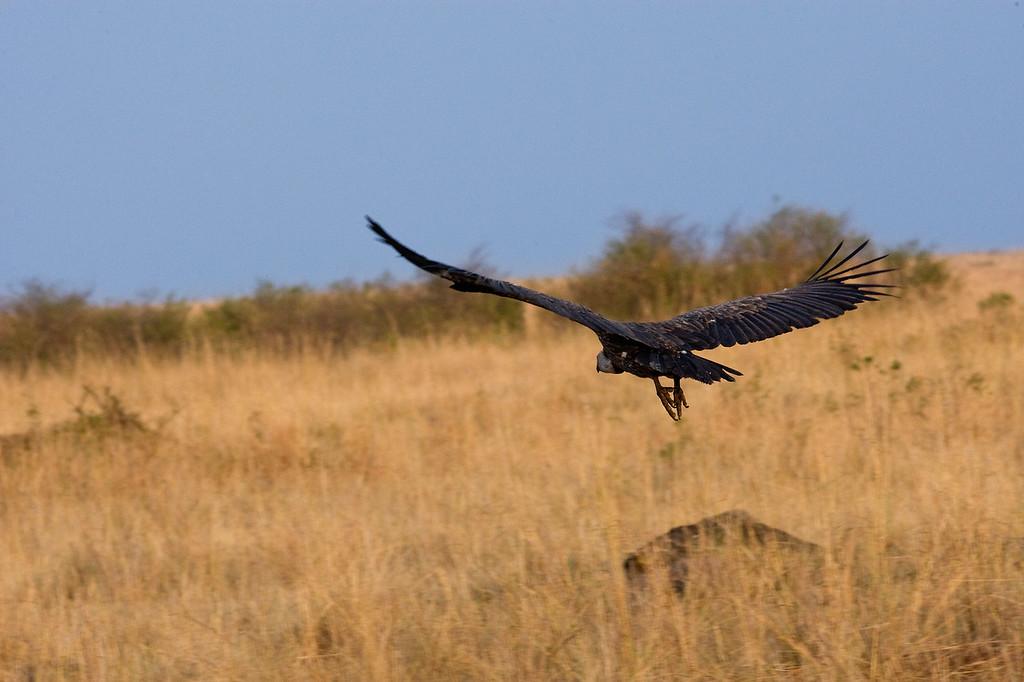 20100909_Maasi Mara_198