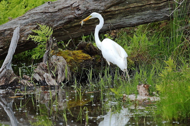 Image #1234<br /> Egrit ~ Reinstein Woods Preserve, Western N.Y.