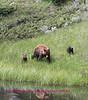 Mom and cubs on the side of Africa lake.