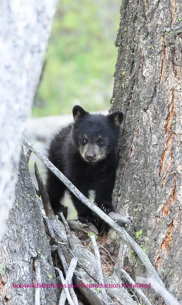 black cub between trees