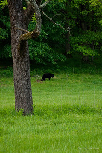 Momma Bear Staring me down!