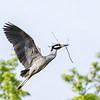 Culler lake Herons 12 May 2018-4078