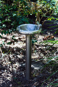 Water Bubbler, Blackbutt Reserve