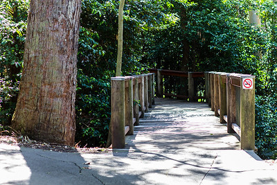 Raised walkways around Blackbutt Reserve