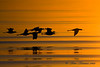 Avocets at sunrise.  Took this picture while wading in the gulf about 100 yds off shore.