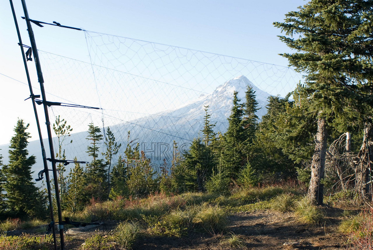 View of Mt. Hood from outside the blind