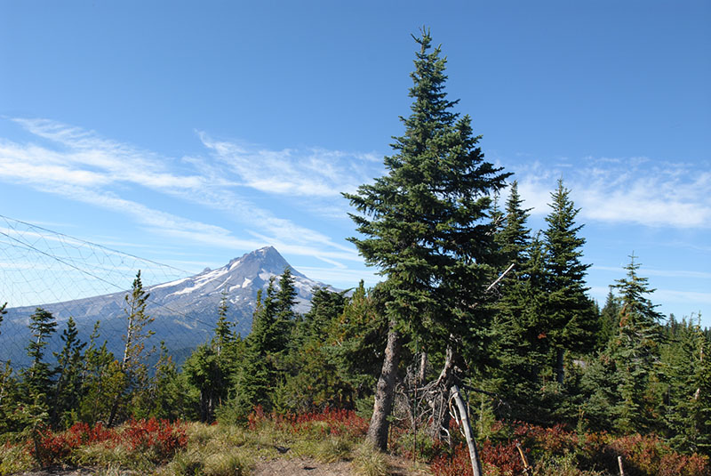 View from the blind, Mt. Hood in the distance