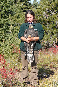 Ready to release a Golden Eagle