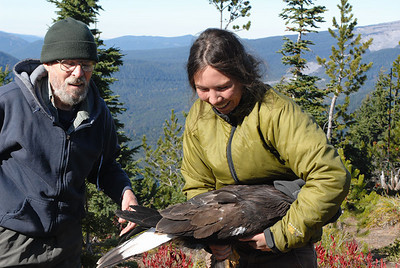 Taking the Golden Eagle back to the blind