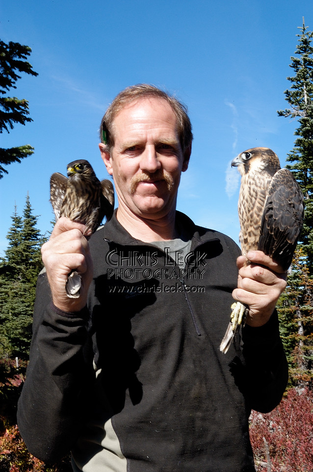 If a bird in the hand is worth two in the bush, how about two beautiful falcons?