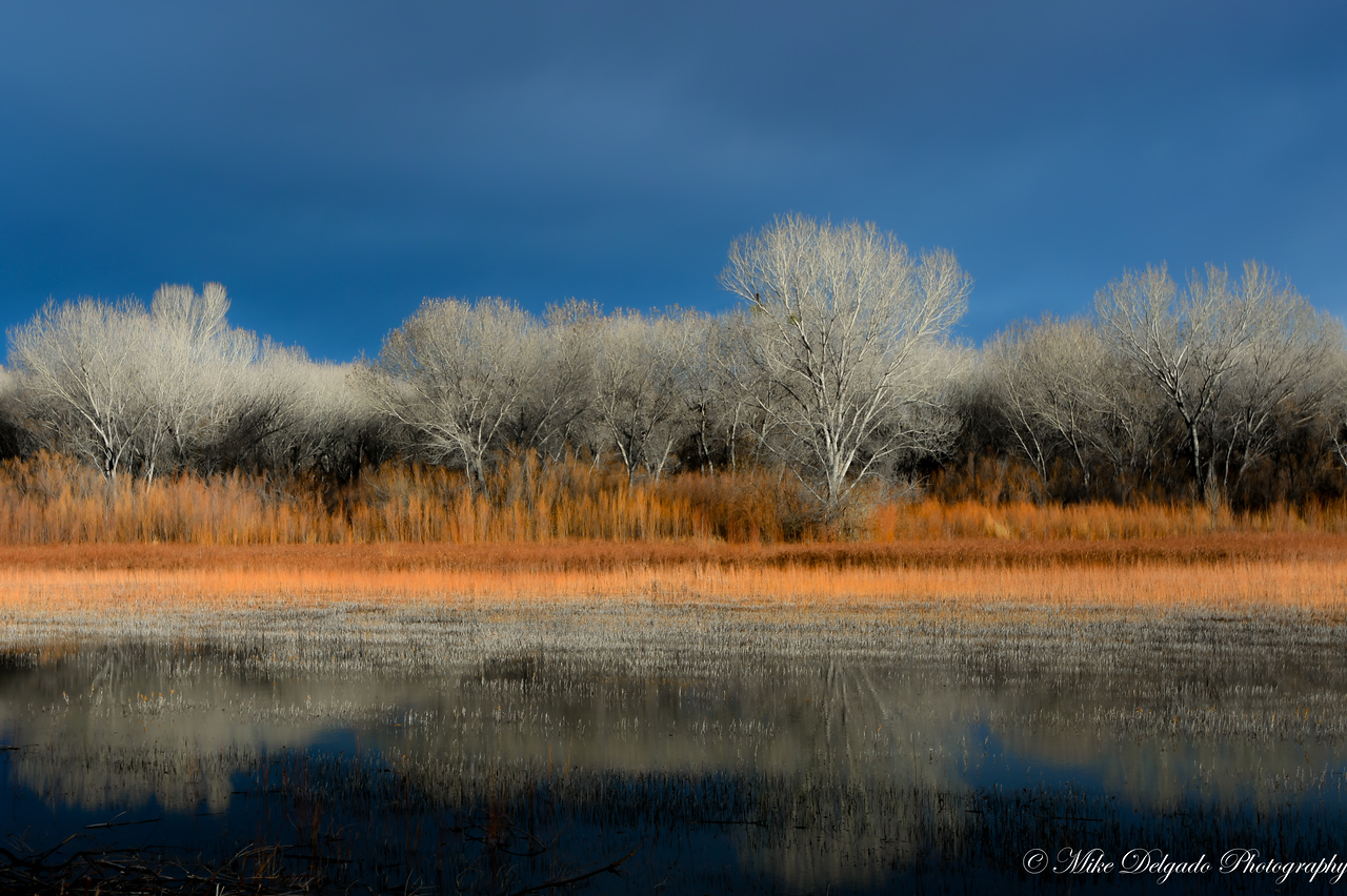Bosque Del Apache in HDR