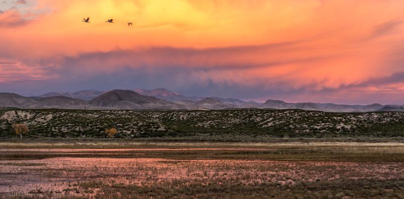 Bosque del Apache Landscape with Sandhill Cranes in Flight