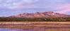 Bosque del Apache Landscape