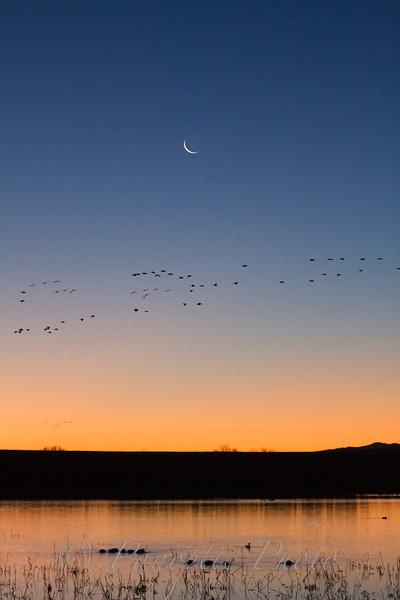 Early Moon, Early Morning