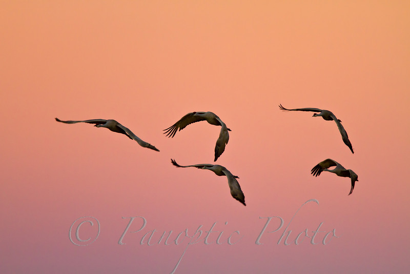 Early Evening Flight