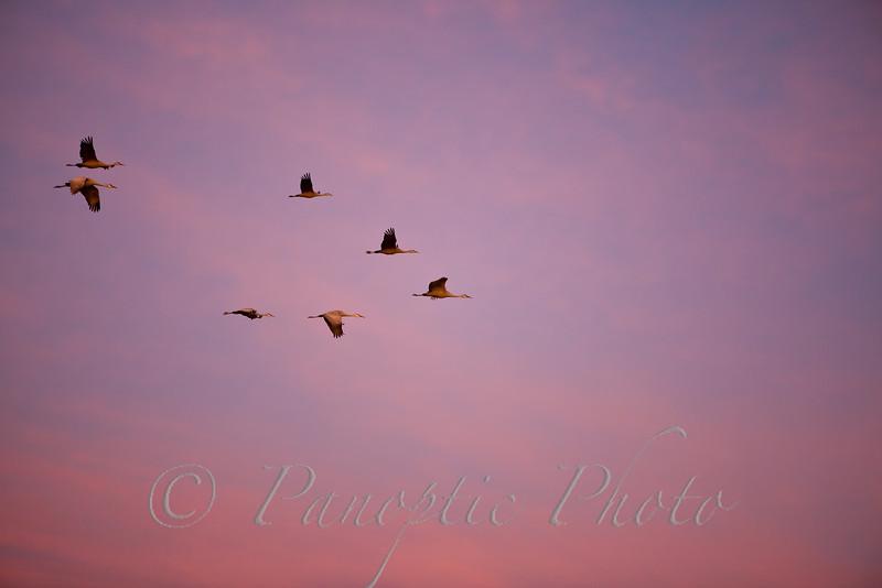 Evening Formation