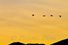 Sunset Synchronization