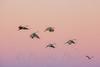 Dreamy Flight