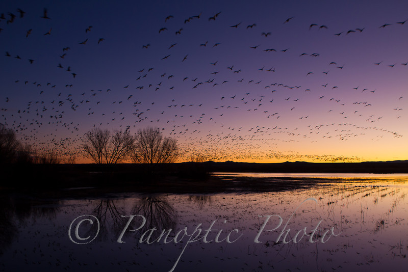 Start of Day at Bosque del Apache