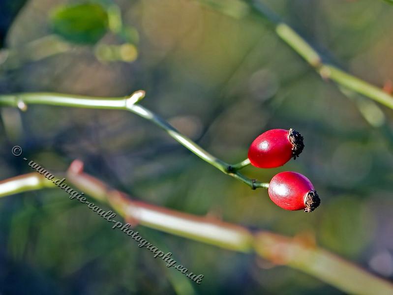 Twin Berries