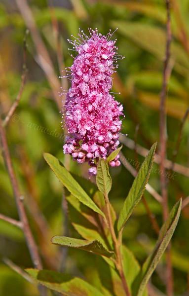Flower - Cove Bay - 2 August 2012