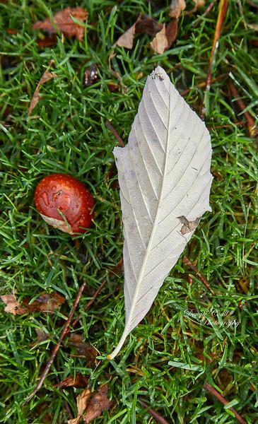 Chestnut Season at Glasgow Green - 21 October 2018