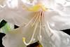 McLean Museum - Flower