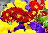 McLean Museum - Flower Garden
