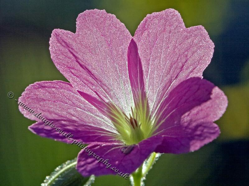 Backlight Flower