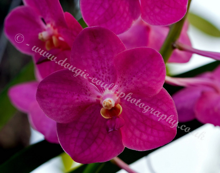 Dark Pink Flower