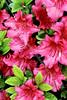 McLean Museum Flowers