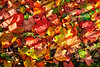 Autumn Leaves in Glasgow - 12 October 2019