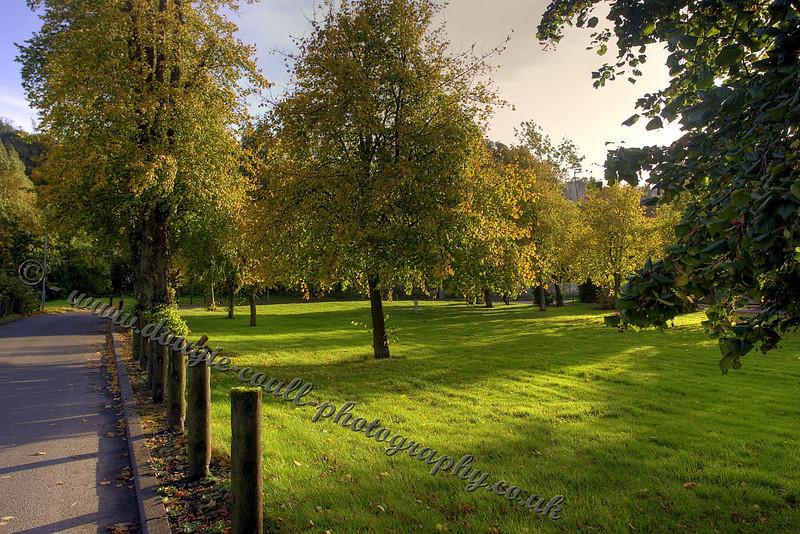 Autumn Trees - Parklee