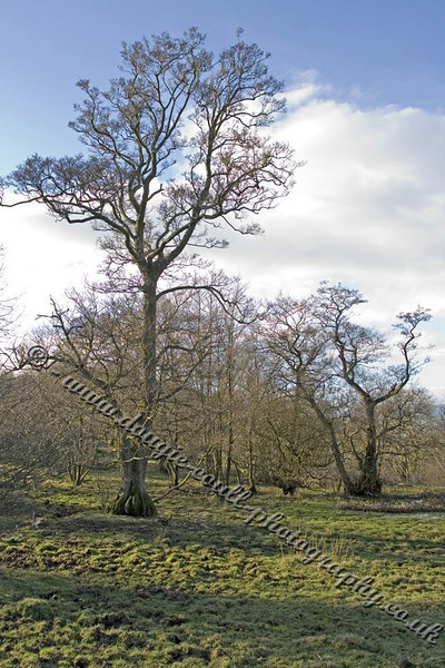 Trees in Langbank