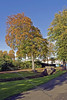 Darroch Park Trees