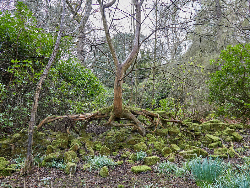Tree in Forest - 3 April 2019