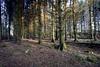 Forest at Loch Thom, Greenock