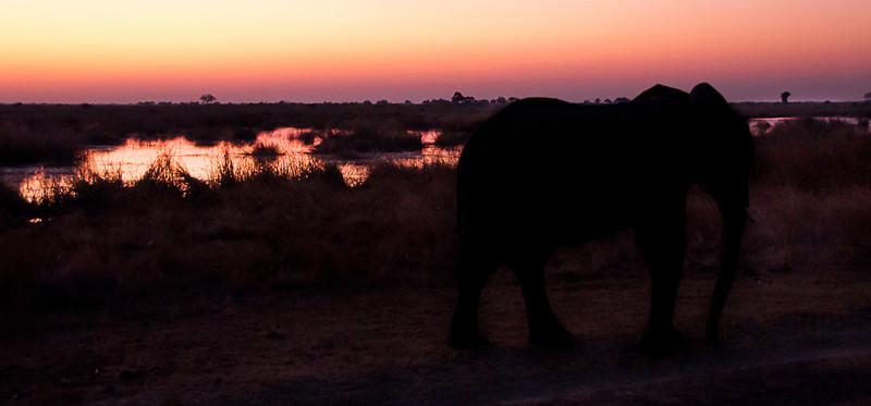 Africa 2012 Botswana Day 9 PM - Linyanti Area - Kings Pool Camp - Mourning Elephants at Sunset