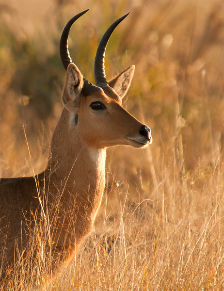 Botswana 2012