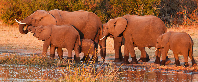 Africa 2012 Botswana Day 6 PM - Linyanti Area - Kings Pool Camp - Elephants at the water at sunset