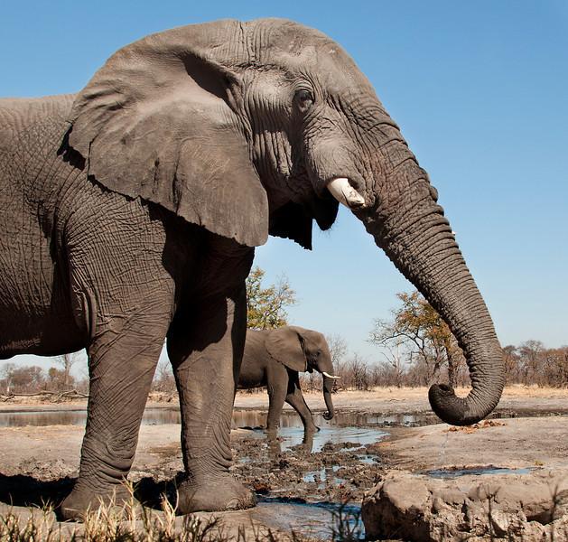 Africa 2012 Botswana Day 8 AM - Linyanti Area - Kings Pool Camp