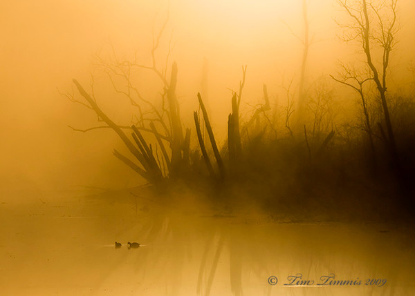 Foggy sunrise at 40 Acre Lake