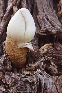 Mushroom on Spillway Trail